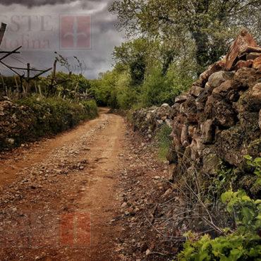 Un tipico sentiero del Carso triestino