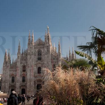 Duomo di Milano tra le palme