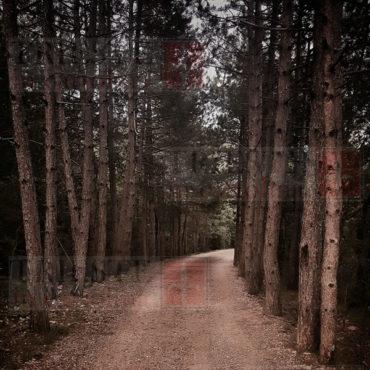 bosco carsico